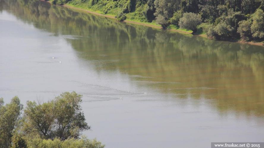 Nature - Dunav
