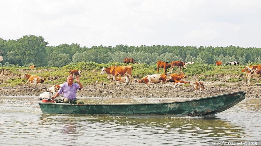 Nature - Krčedinska ada - biser prirode na Dunavu