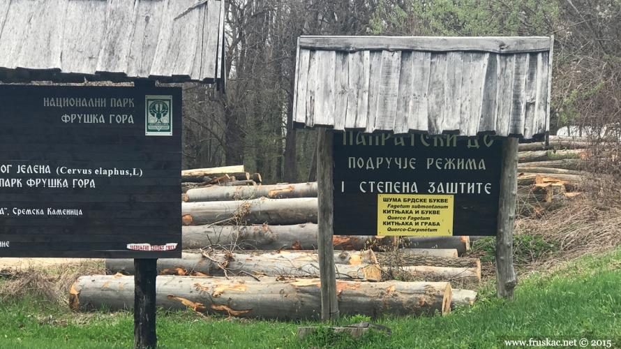 News - Seča šume kod I stepena zaštite (Papratski Do)