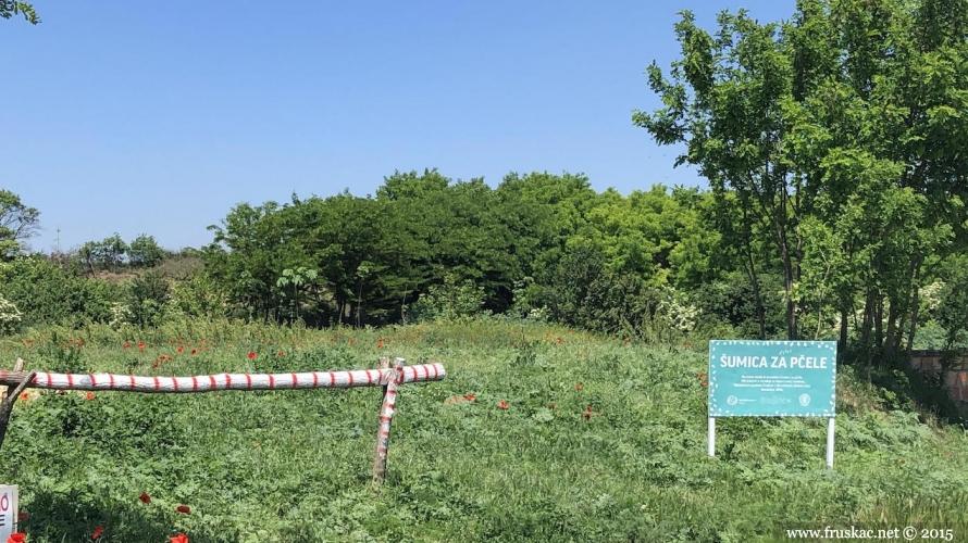 """Ecology - Finalna akcija farbanja bedema kod jezera Moharač u okviru projekta """"SmELO"""""""