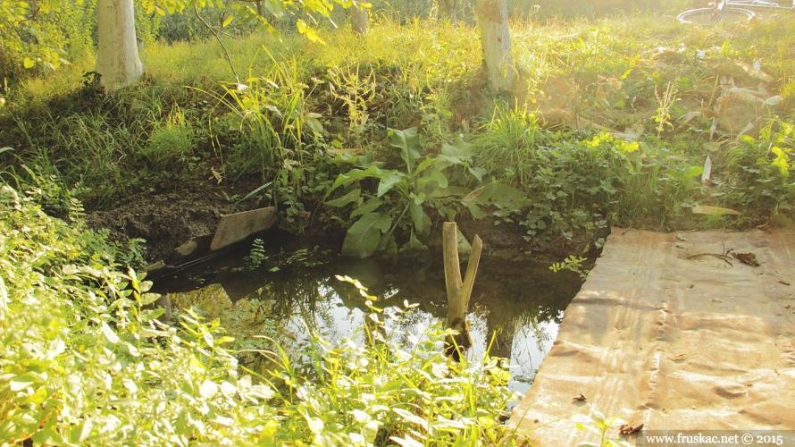 Springs - Izvor Virevi
