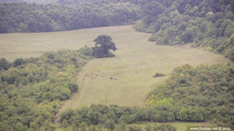 Meadows - Livada Tekeniš