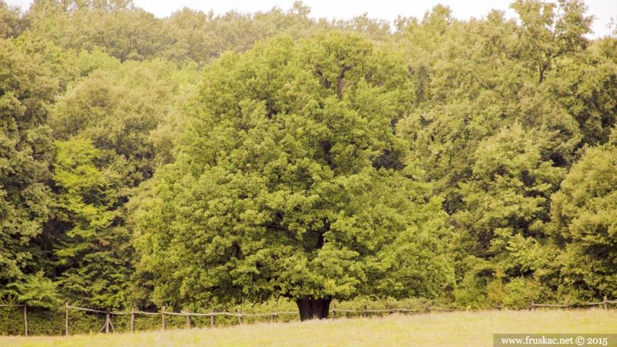 Meadows - Livada Trešnjevac