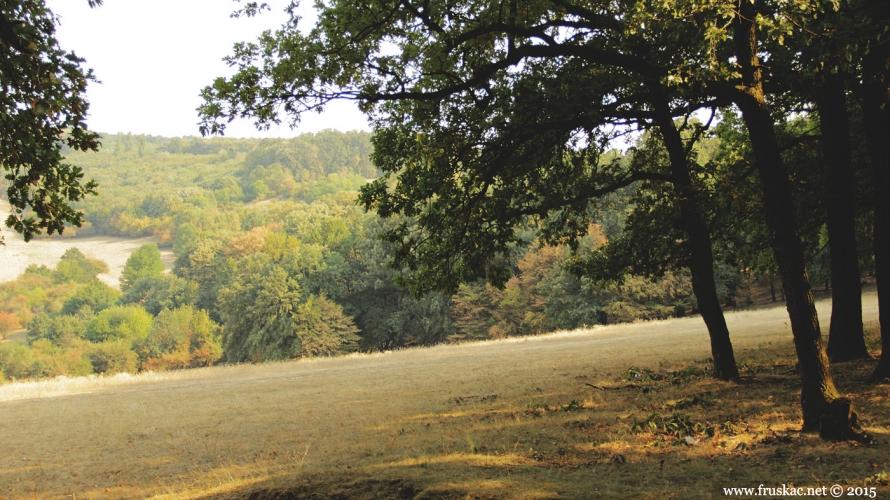 Meadows - Livada Kišelez