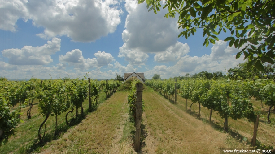 Wineries - Vinarija Tri međe i oblak
